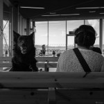 x100s Trondheim Ferry Terminal July 2014